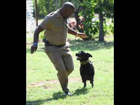 District Constable Okeino Ashley goes through a routine with pal and partner of eight years, Tim.