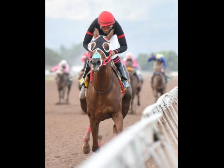 Sentient, ridden by jockey Anthony Thomas, winning the Overnight Allowance over 1,600 metres at Caymanas Park on Saturday, February 15.