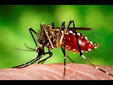 The female Aedes aegypti mosquito is the vector for dengue fever.