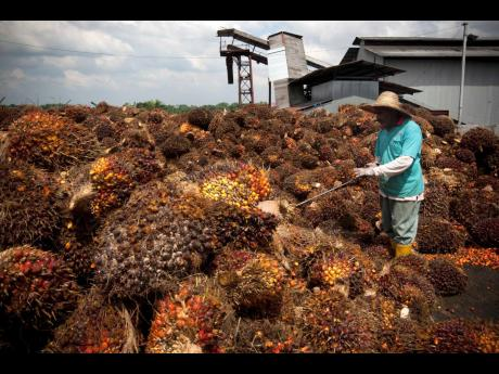 In this November 4, 2009 photo, a worker tends to palm oil fruits at a collection centre in Dangkil, outside Kuala Lumpur, Malaysia.