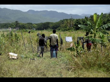 Day workers who are contracted by small cultivators on the Holland Estate in  St Elizabeth prepare to leave the farm on Tuesday. The lands have embroiled Minister J.C. Hutchinson in a melodrama over potential conflict of interest.