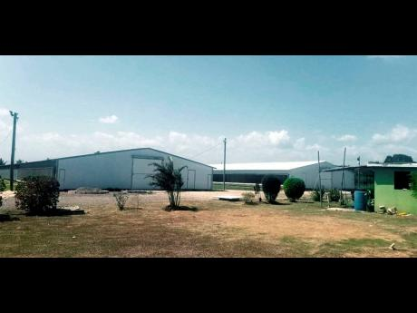 Two of the chicken houses built by Rosemarie Samuels in Rhymesbury, Clarendon. The Supreme Court has ordered the Jamaica Public Service Company to pay her $65 million for trespass breaches.