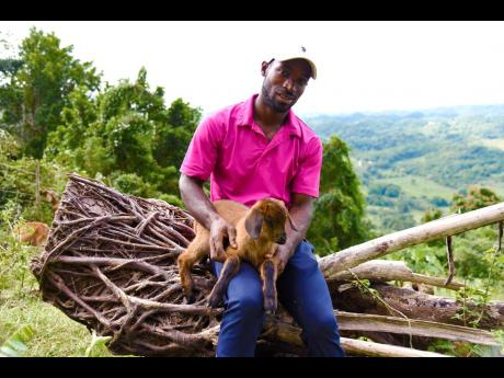 Prime Minister's Youth Awardee LaFrance Gayle has dreams of expanding his livestock in Top Hill, Manchester.