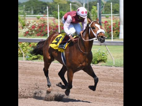 Patriarch, ridden by Dane Nelson, eases to victory in the second race at Caymanas Park on Saturday, January 4, 2020.